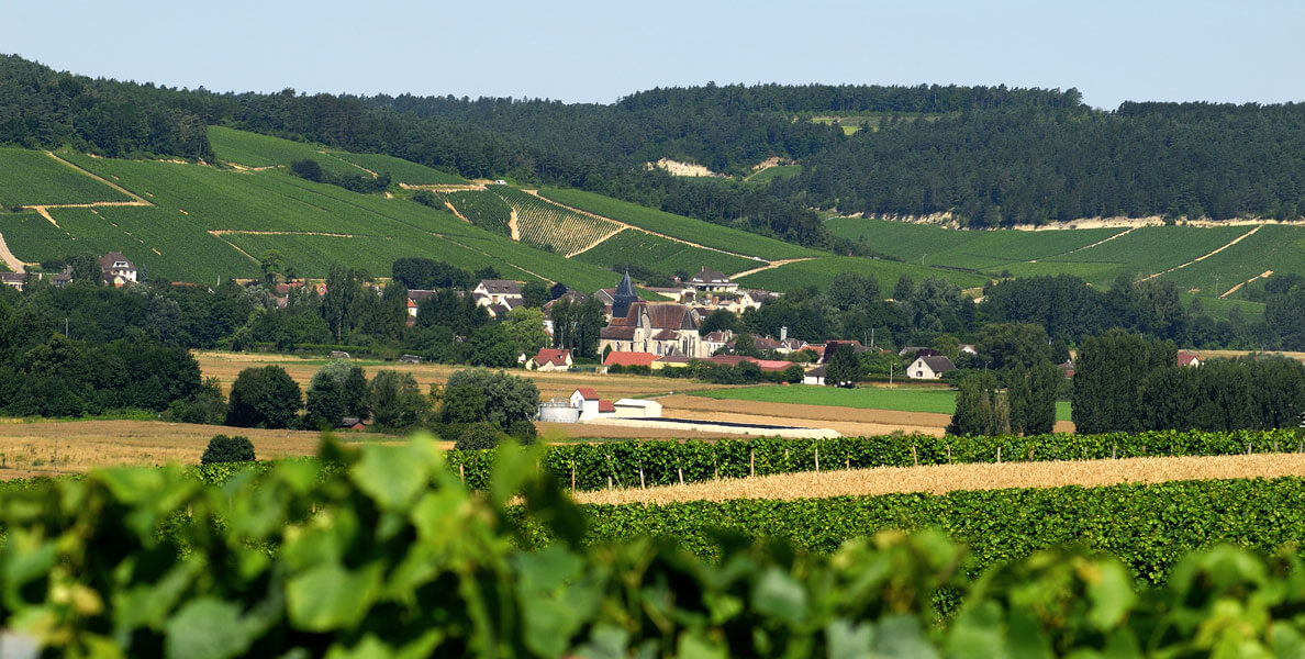 Bbv domaine champagnepiollot