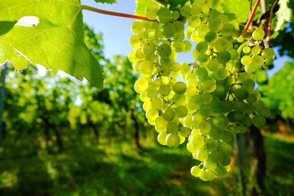 Domaine Gauffroy – Bourgogne Blanc