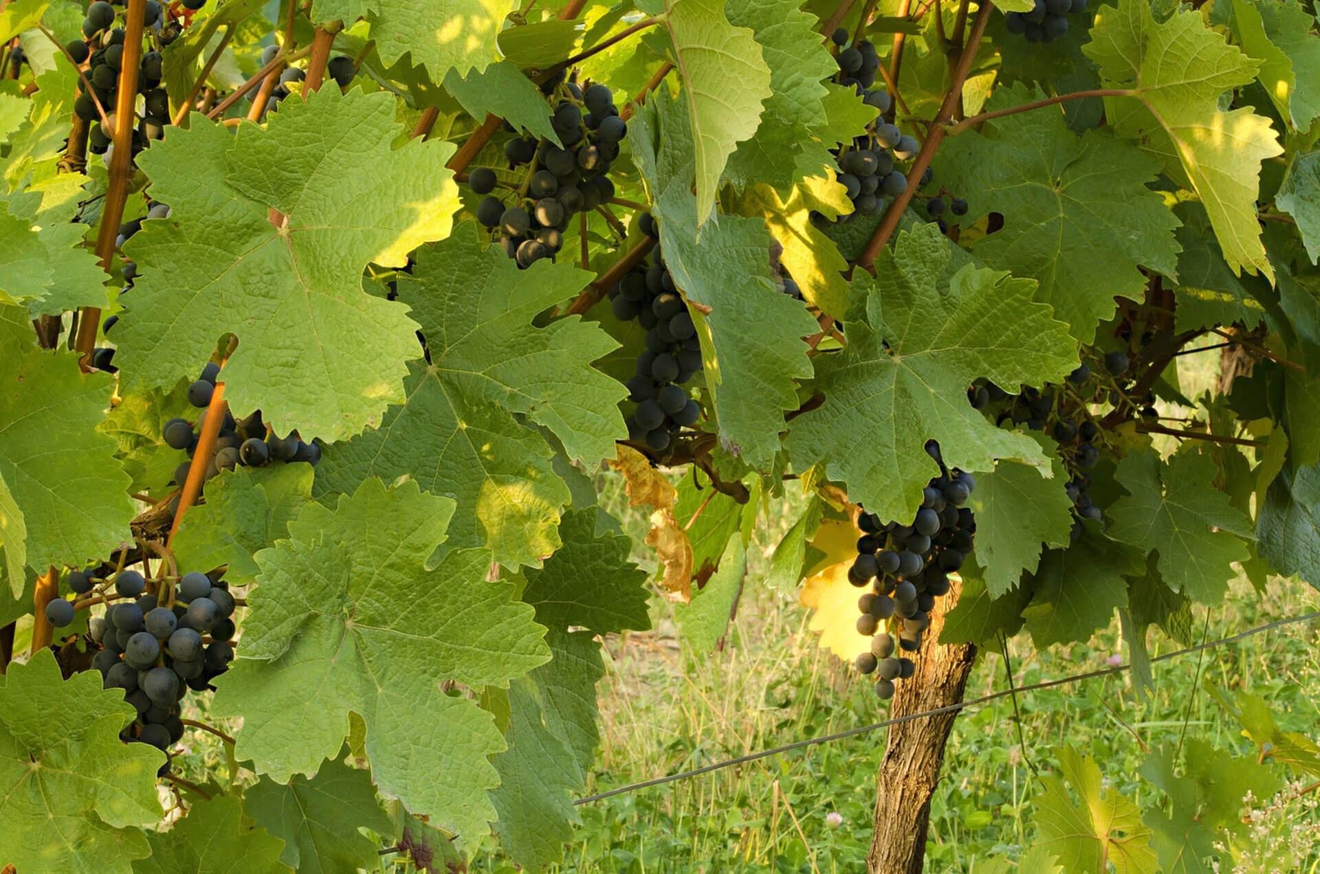Vin rouge 5